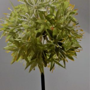 Allium bol giant geel-groen 75 cm
