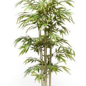 Bamboe Boom 180cm