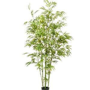 Bamboe boom 150cm