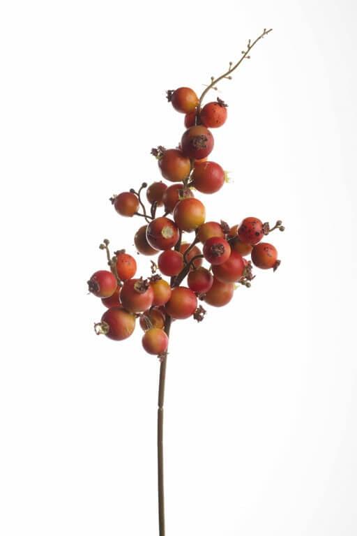 Bessentak herfst 30cm