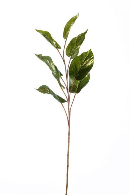 Bladtak Bonte Ficus 78cm