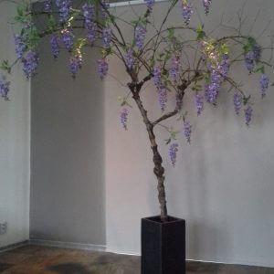 Bloesemboom Blauwe Regen