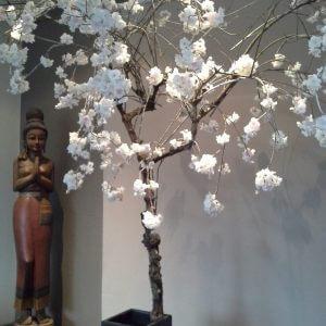 Bloesemboom Japanse Kers