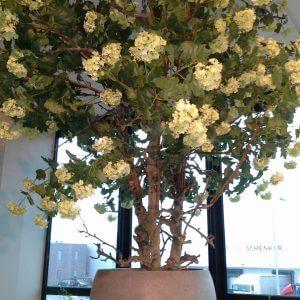 Bloesemboom viburnum