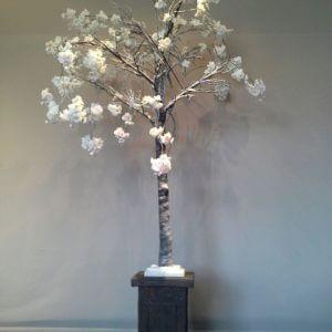Bloesemboompje huren