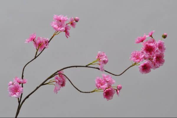 Bloesemtak donker roze