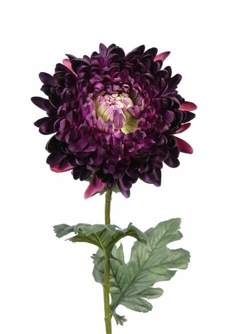 Bolchrysant dk paars 75cm