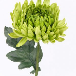 Bolchrysant groen 37cm