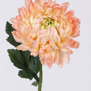 Bolchrysant perzik 37cm