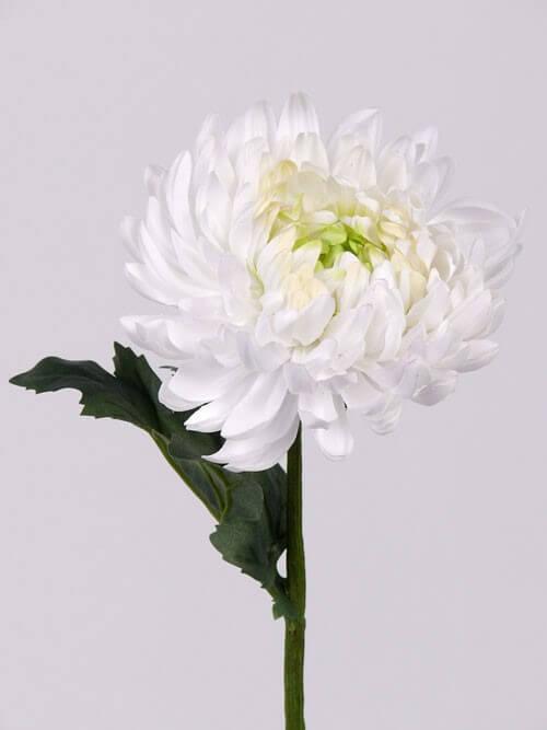 Bolchrysant wit 37cm