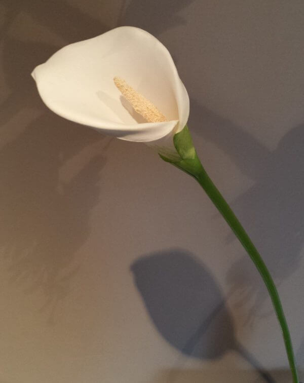 Calla foam white