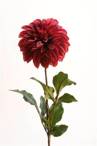 Dahlia Bordeaux 35cm