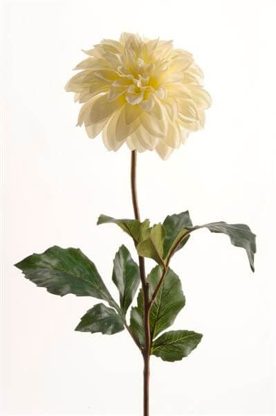 Dahlia creme 35cm