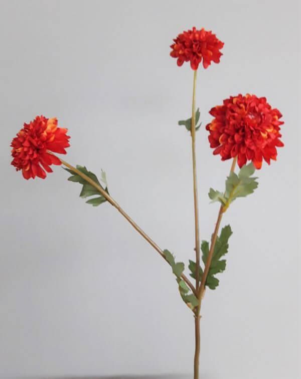 Dahlia oranje rood