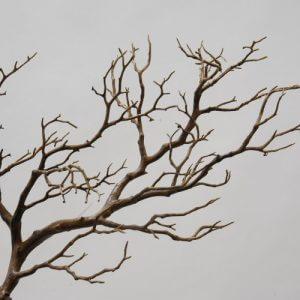 Decoratietak Branch 76 cm