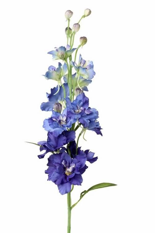 Delphinium blauw 60 cm