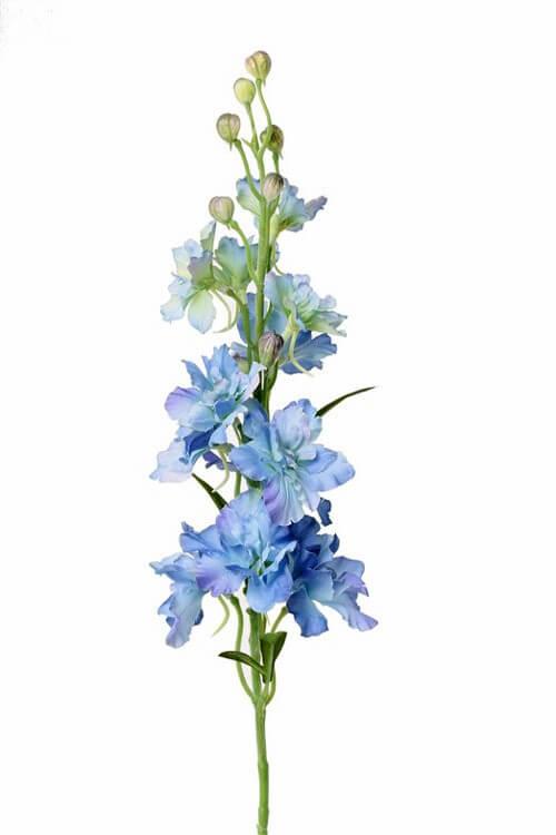 Delphinium licht-blauw 60 cm