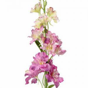 Delphinium roze 60 cm