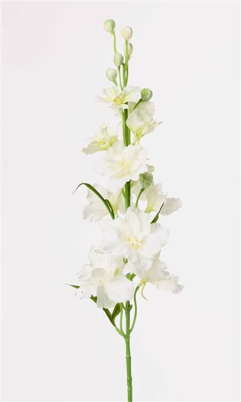 Delphinium wit 60 cm