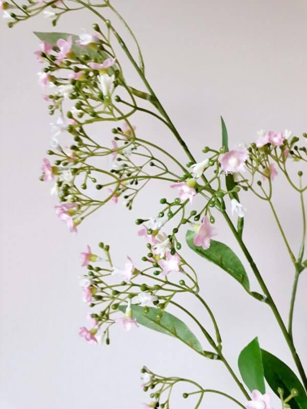 Euonymus roze 85 cm