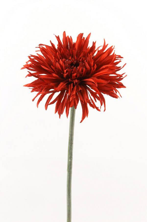 Gerbera rood 60cm