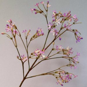Gipskruid lila-roze