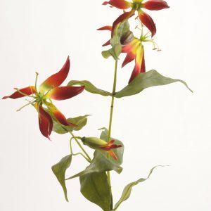Gloriosa rood/geel 70cm