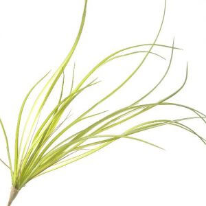 Gras Spray 71cm