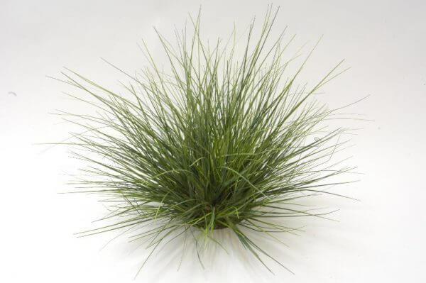 Grass Bush Union 36cm