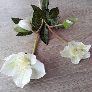 Helleborus wit 40 cm