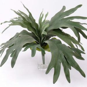 Hertshoorn Platycerium 50cm