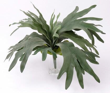 Hertshoorn Platycerium 70cm