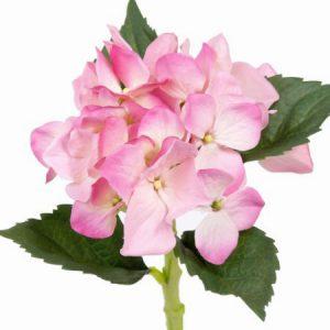 Horensia roze wit 31cm