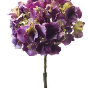 Hortensia Groot Paars 50cm