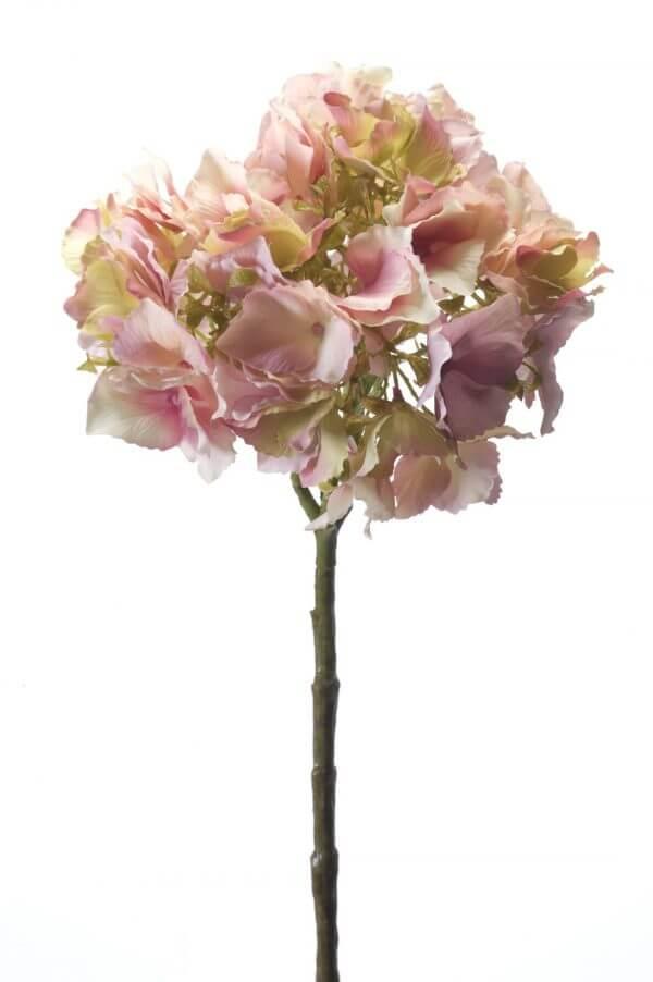 Hortensia Groot roze 50cm