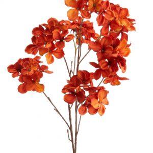 Hortensia Hydrangea oranje