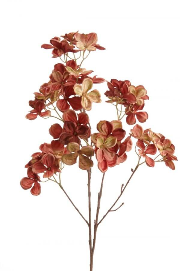 Hortensia Hydrangea rood