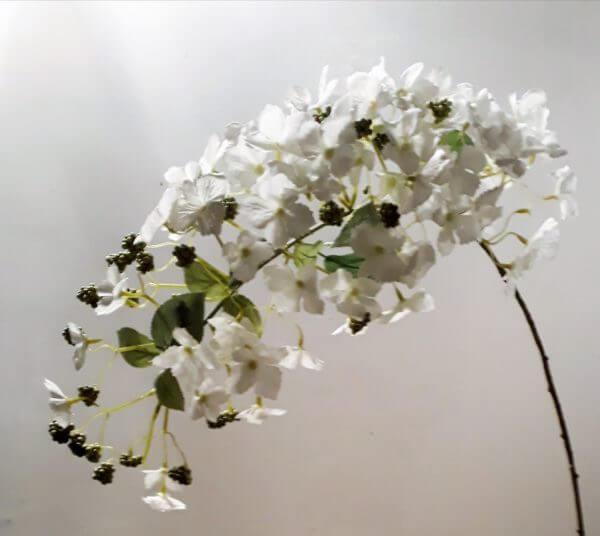 Hortensia Paniculata 107 cm