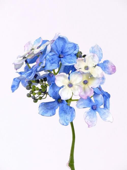 Hortensia blauw wit 30cm