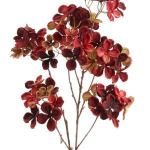 Hortensia bordeaux rood