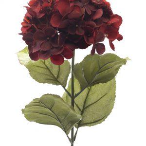 Hortensia donker rood 65cm