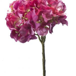 Hortensia fuchsia 50cm