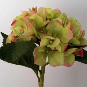 Hortensia groen-roze 45cm