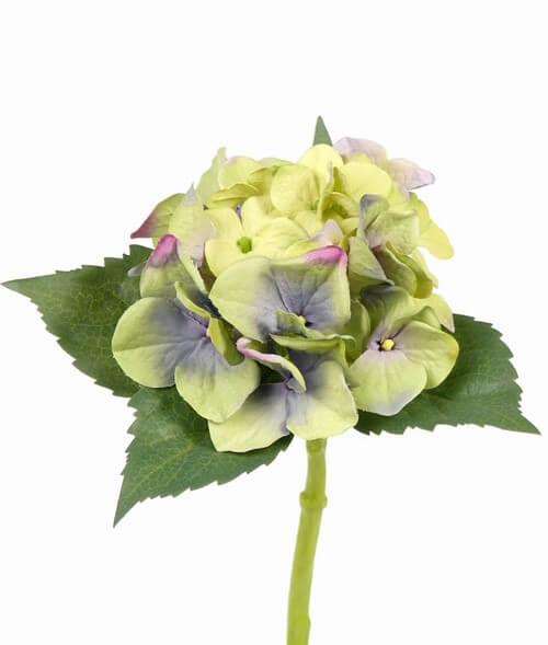 Hortensia licht groenblauw 31cm