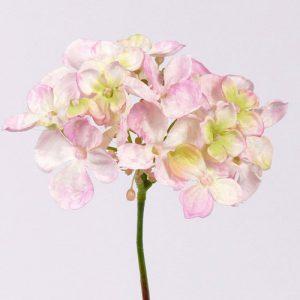 Hortensia licht rose 30cm