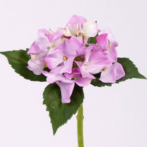 Hortensia paars roze 31cm