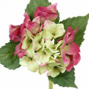 Hortensia roze groen 31cm