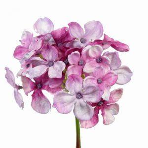 Hortensia roze paars 30cm
