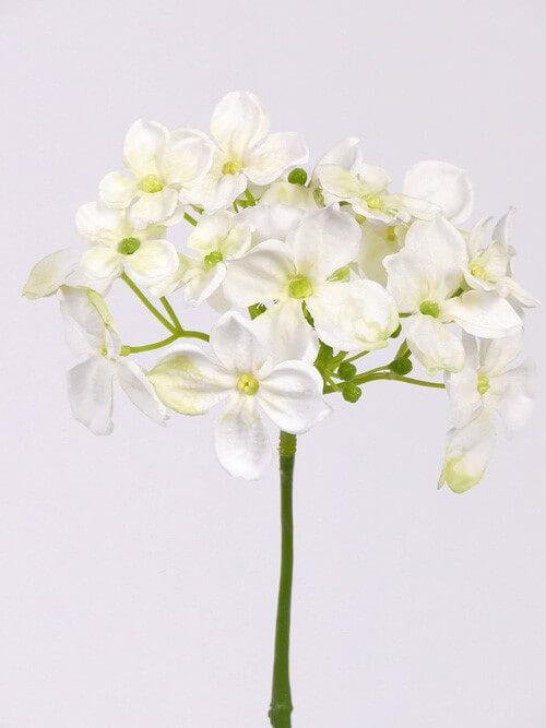 Hortensia wit 30cm