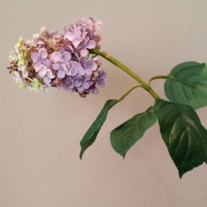 Hydrangea Paniculata 88 cm